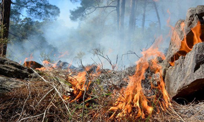 Çıkan yangında 5 dönüm orman alanı zarar gördü