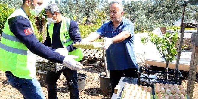 Bitezli yumurta üreticisini iflastan Bodrum Belediyesi kurtardı