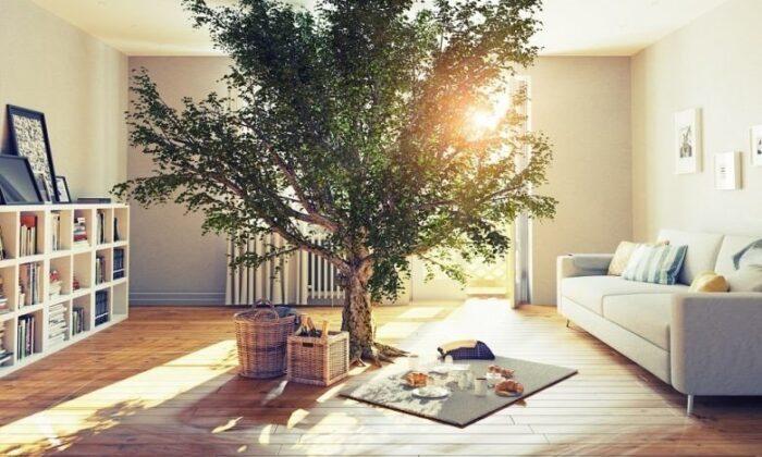 Evinize doğayı getirecek öneriler