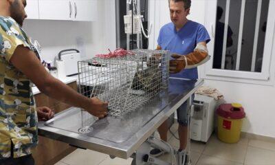 Bodrum'da otomobilin çarptığı kedi tedaviye alındı