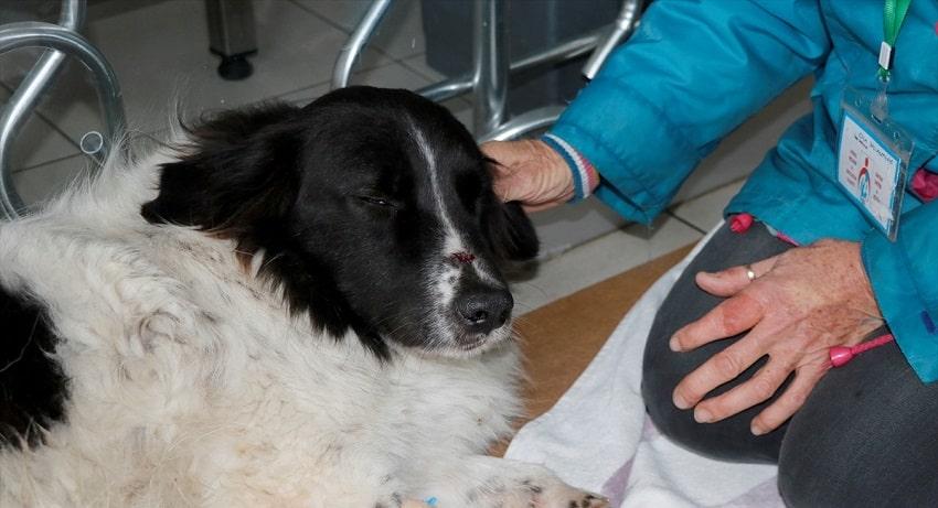 Sokak köpeğinin sopayla dövüldüğü iddia edildi